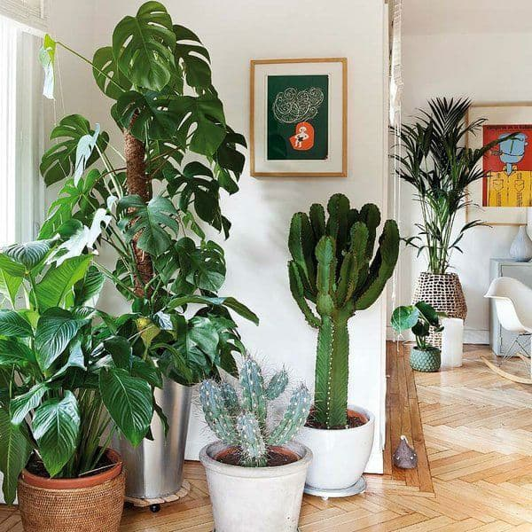 Decorating Dilemma House Plants: How Biophilic Design Can Boost Home