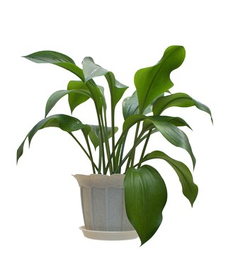 Why You Should Have A Living Plant In Your Home Empatika