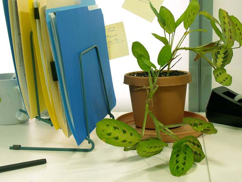 Plants Perfect For Your Office